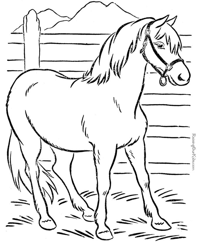 real animal coloring pages at getdrawings free for