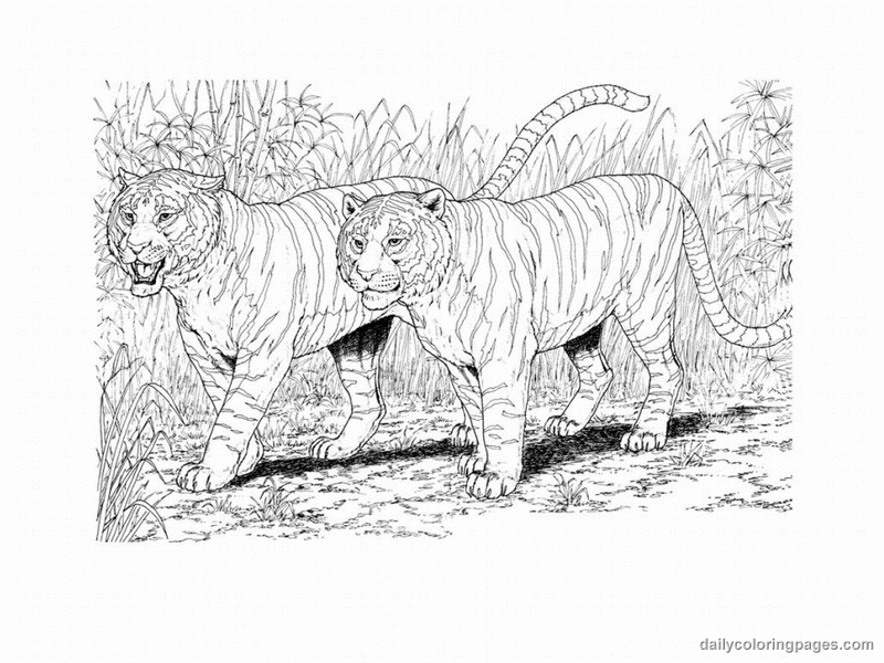 realistic animal coloring pages printable