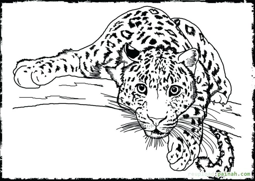 realistic wild animal coloring pages at getdrawings