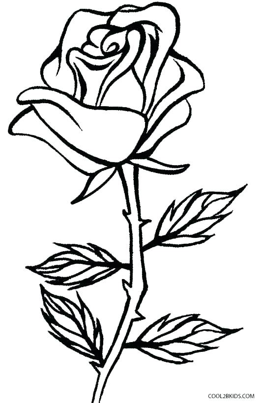 rose coloring pages at getdrawings free for personal