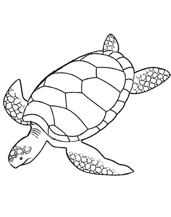 sea turtle coloring page coloring page book for kids