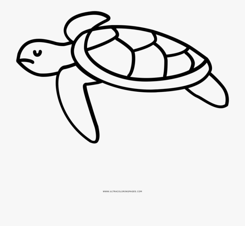 sea turtle coloring page line drawing sea turtles