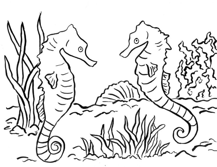 seahorse coloring page art starts for kids