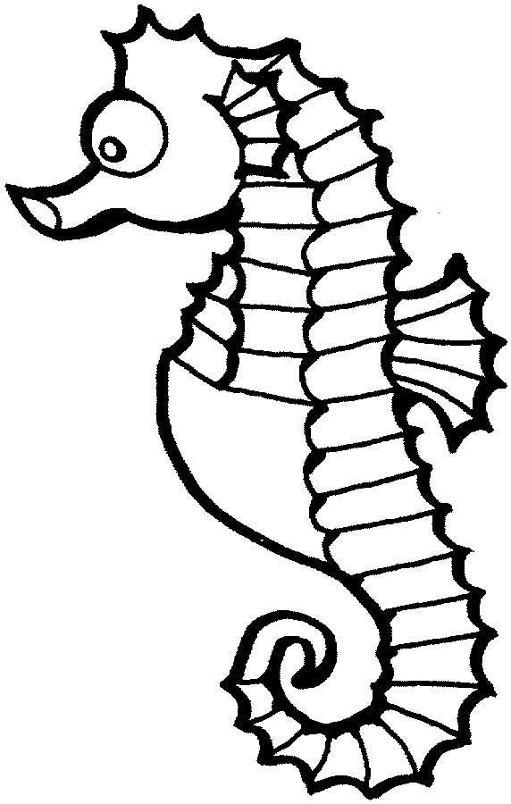 seahorse coloring page for kids free printable picture