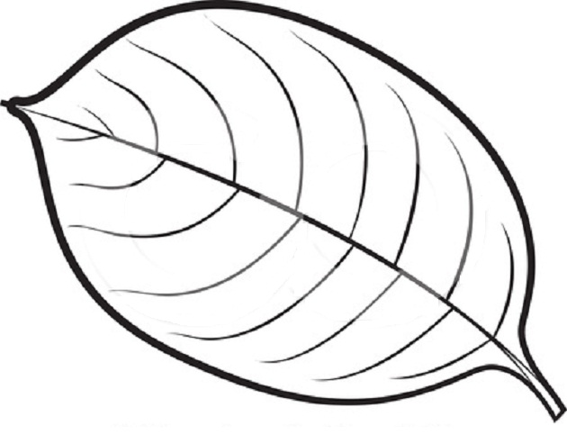 simple leaf coloring pages at getdrawings free for