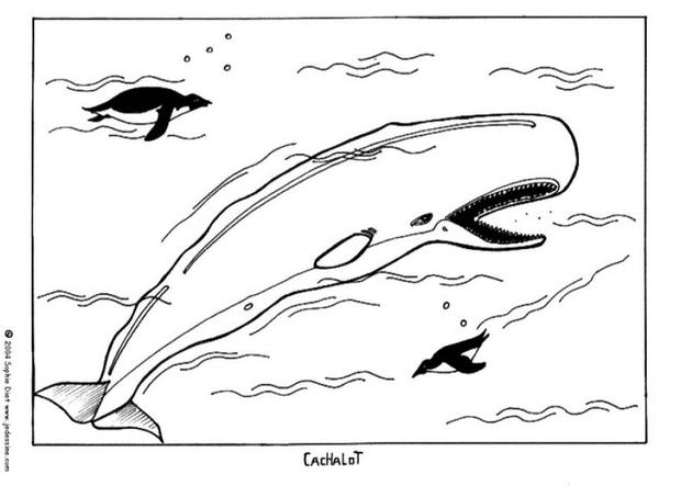 sperm whale coloring pages hellokids