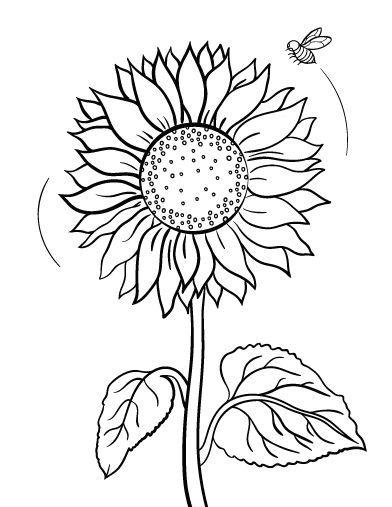 sunflower coloring pages sunflower coloring pages to