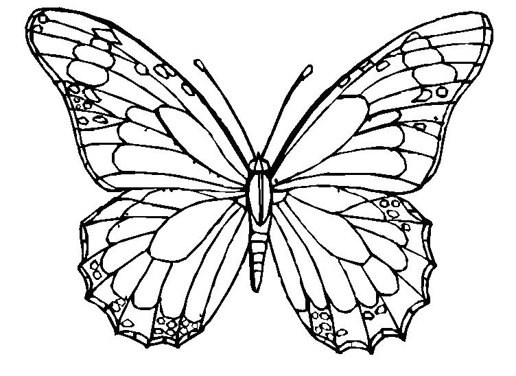 the adult butterfly coloring pages butterfly coloring page