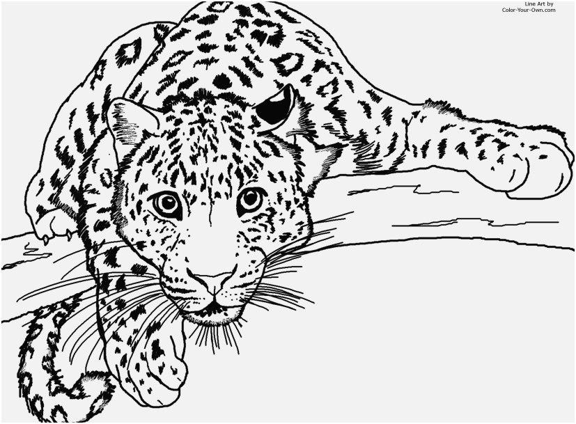 the best capture leopard coloring pages elegant yonjamedia
