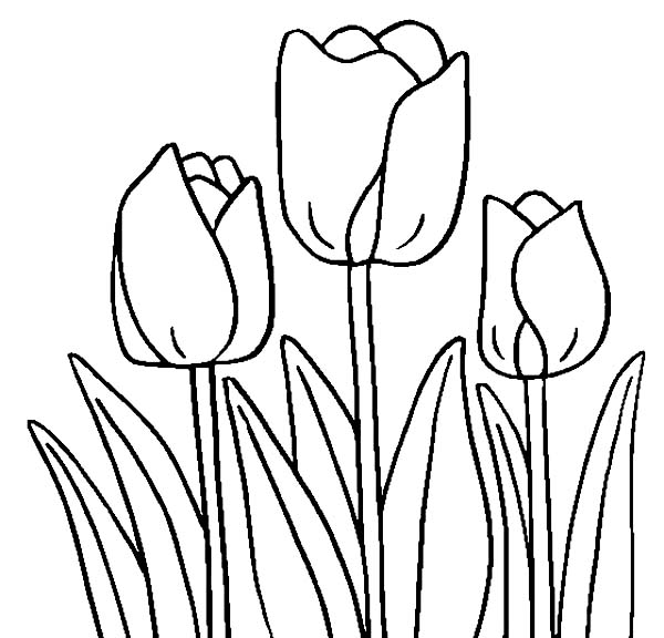 tulip 84 nature printable coloring pages