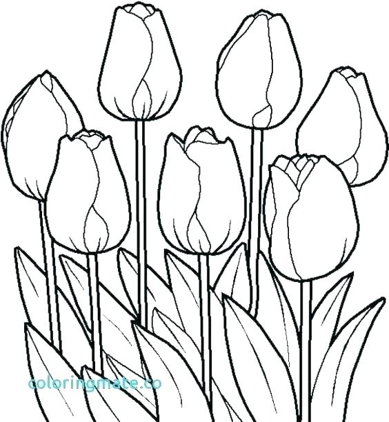 tulips coloring pages printable marigold flower juetuclub