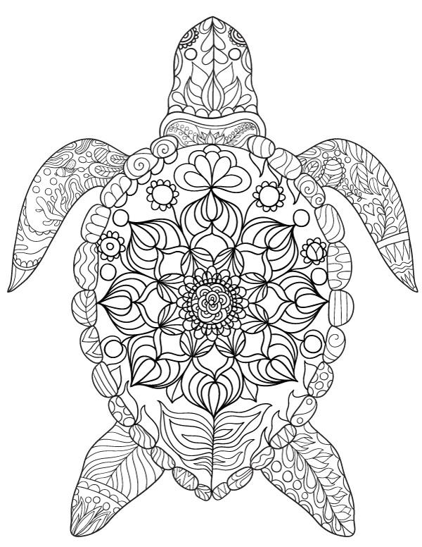 turtle coloring pages telematik institut
