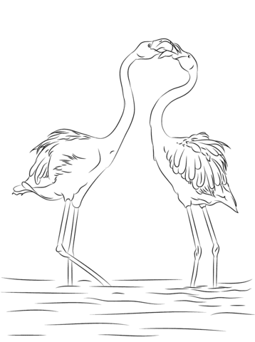 two beautiful flamingo coloring page free printable