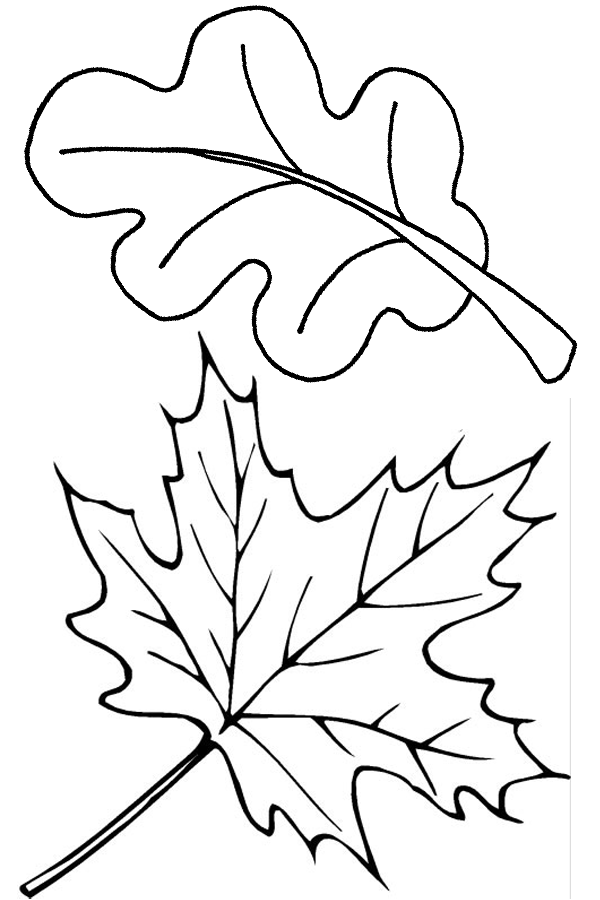 two fall leaves coloring page free printable coloring