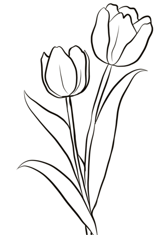 two tulips coloring page from tulip category select from