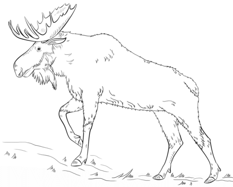 walking moose coloring page free printable coloring pages