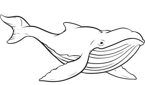 whale 64 animals printable coloring pages