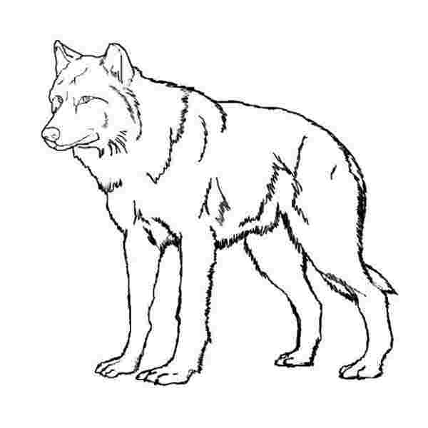 wolf coloring pages images wolf coloring page adult coloring