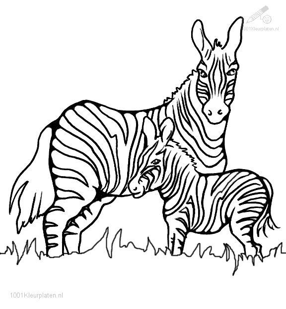 zebra printable coloring pages