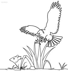 harpy eagle coloring sheet eagle coloring pages harpy