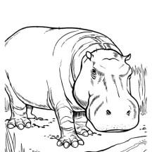 hippo netart