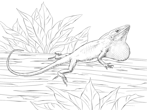 monitor lizard coloring pages coloring pages