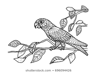 parrot color drawing images stock photos vectors