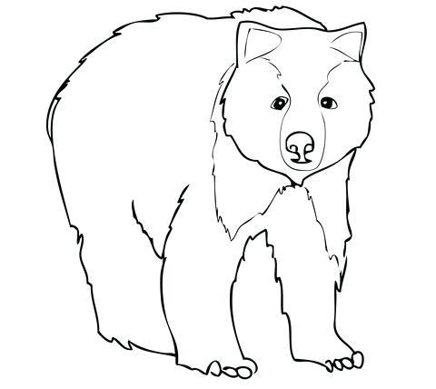 polar bear face drawing at getdrawings free download