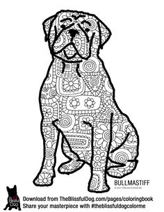 52 best bullmastiff images dogs mastiff dogs big dogs