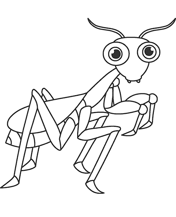 bugs and insects coloring pages learny kids