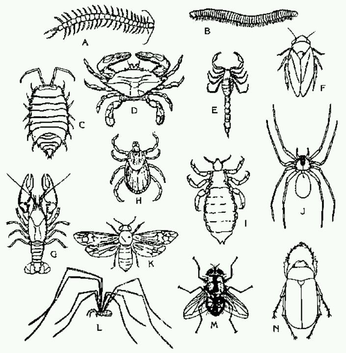 insect coloring page with images insect coloring pages