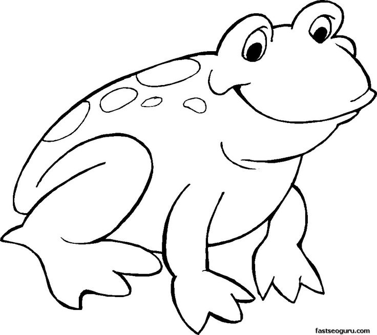 realistic frog coloring pages free download on clipartmag