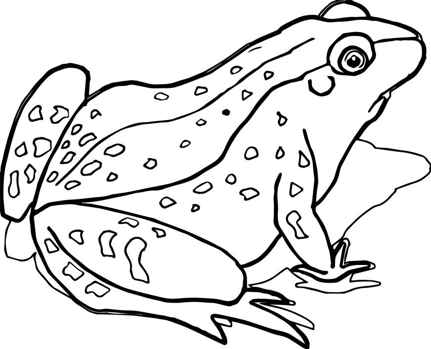 waiting realistic frog coloring page wecoloringpage