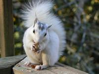 baby white squirrel