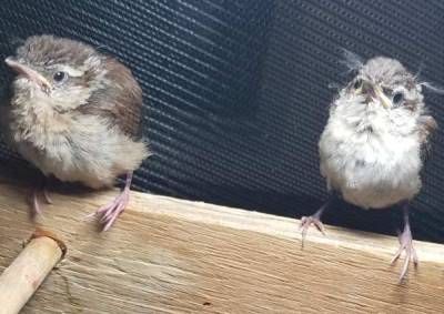 two-baby-birds