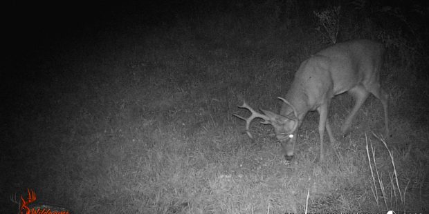 Five Reasons You're Not Seeing Mature Whitetail Bucks 1