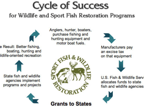 Participation in hunting sports is dwindling at an alarming rate! Here's what you can do to help. 6