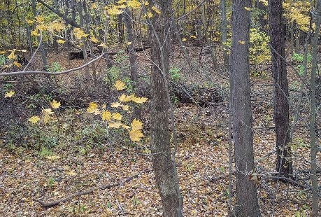 Whitetail Rut-cation Journal 11/7/2018 1