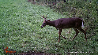 Ohio Whitetail Buck