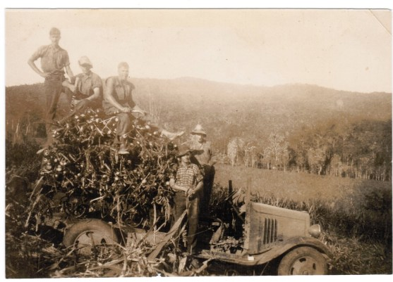 Loading sugarcane at Conway 1930-40