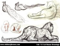 cathouse022015sm