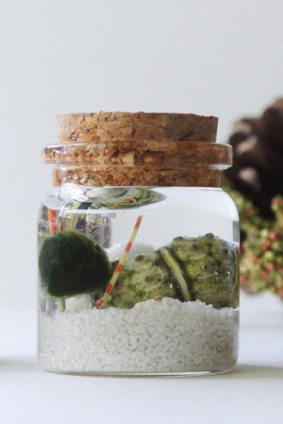 mini aqua terrarium