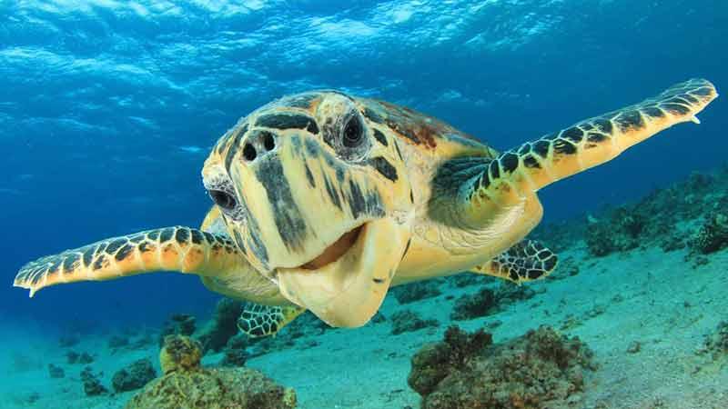 34% whitsundays turtle tour