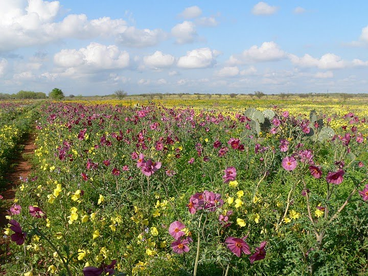 Texas in Bloom