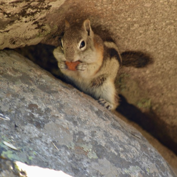 Chipmunk eating one of our almonds. These little guys were so cute!