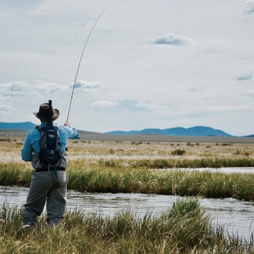 A man fly fishing in a stream that winds through the plains of Colorado.