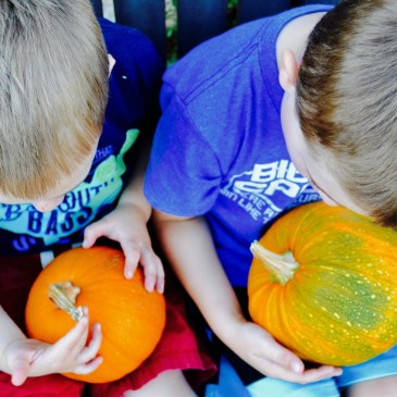 Two toddler boys wearing blue shirts each holding a pie pumpkin in their laps.