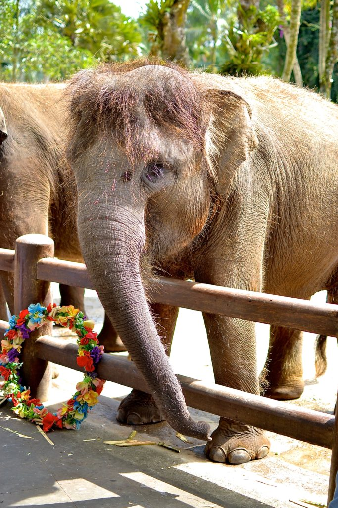 elephant sanctuary bali