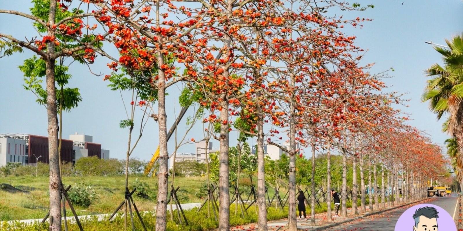 台南景點【台南高鐵木棉花大道】季節限定的橘紅色花海美景!370株木棉花 全長約700米