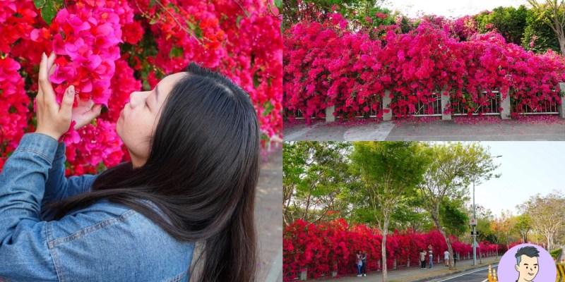 【台中景點】台中超美九重葛花牆~500公尺浪漫粉色步道 | 台中東大公園 中科九重葛祕境 美不勝收的網美打卡點